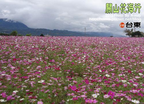 BC191 台東關山花海03
