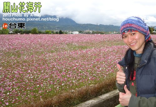 BC191 台東關山花海04