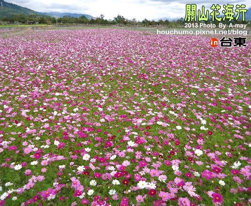 BC191 台東關山花海05