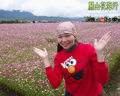 BC191 台東關山花海06
