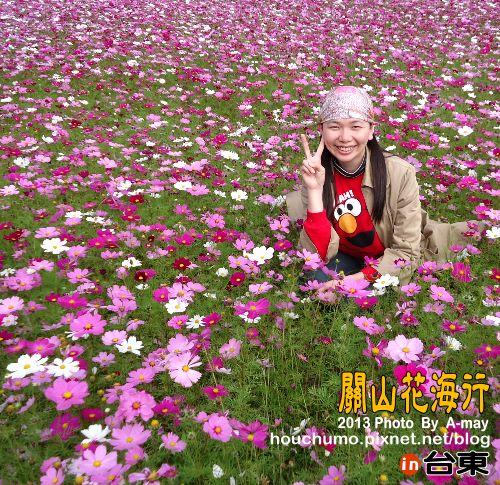BC191 台東關山花海09