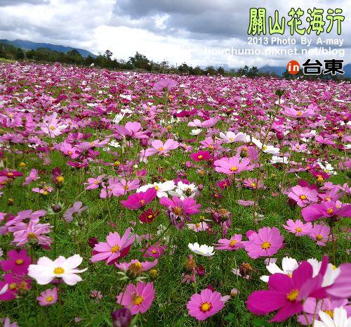 BC191 台東關山花海10