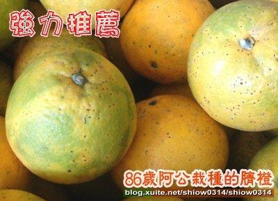 SHOW阿公栽種的臍橙85 01.jpg