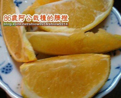 SHOW阿公栽種的臍橙85  04.jpg
