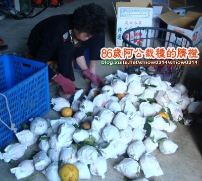 SHOW阿公栽種的臍橙85  06.jpg