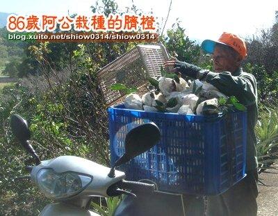 SHOW阿公栽種的臍橙85  09.jpg