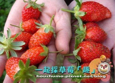一起採草莓「趣」80  03.jpg