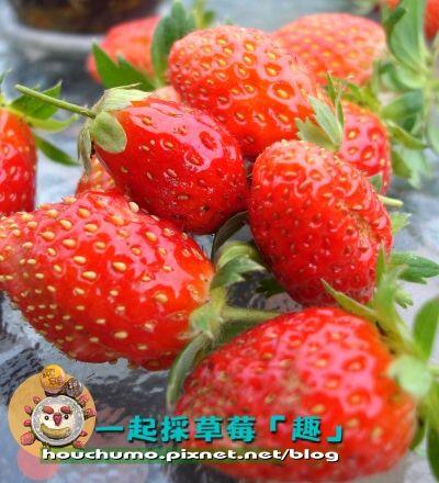 一起採草莓「趣」80  06.jpg
