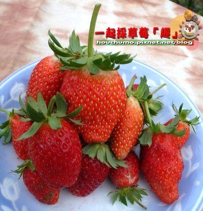 一起採草莓「趣」80  08.jpg