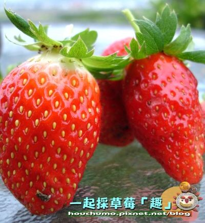 一起採草莓「趣」80  09.jpg