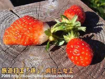 BC057旅遊打工「趣」.瘋狂二女工(3)80  26.jpg