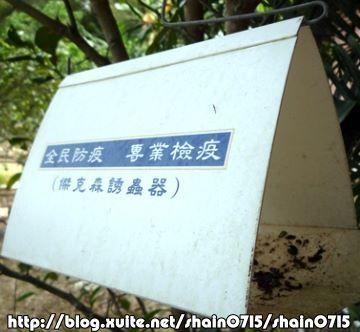 BC116肚臍柑成熟了80  05.jpg