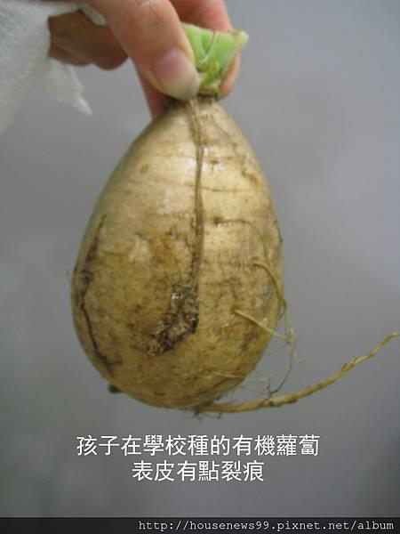 學校種的蘿蔔