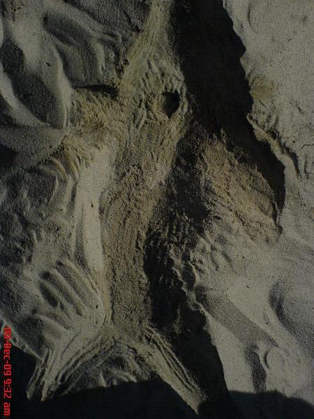 沙雕  海豚 .. 好像有點可怕.jpg