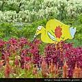 花叢裡的花鷺鷥~