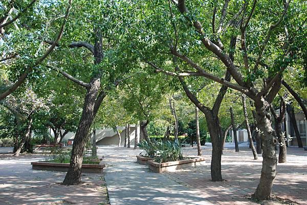校園一角─綠樹成蔭(很沒學問的形容= =)