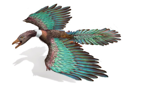 最小2-始祖鳥