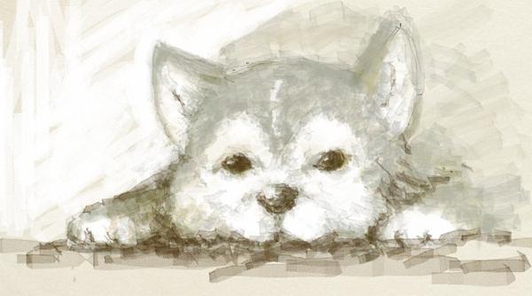 KANi love Husky