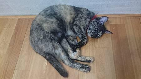 張畫家的貓