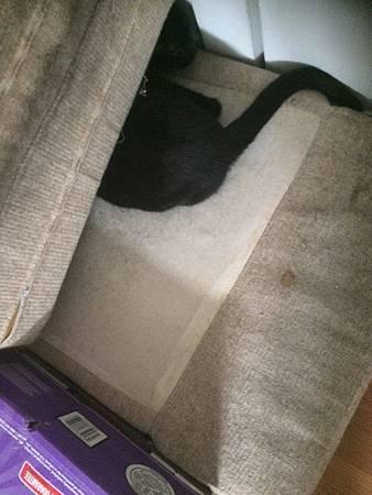 貓不見2.jpg