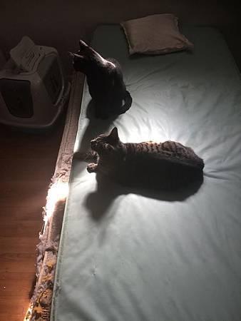 貓不見4.jpg