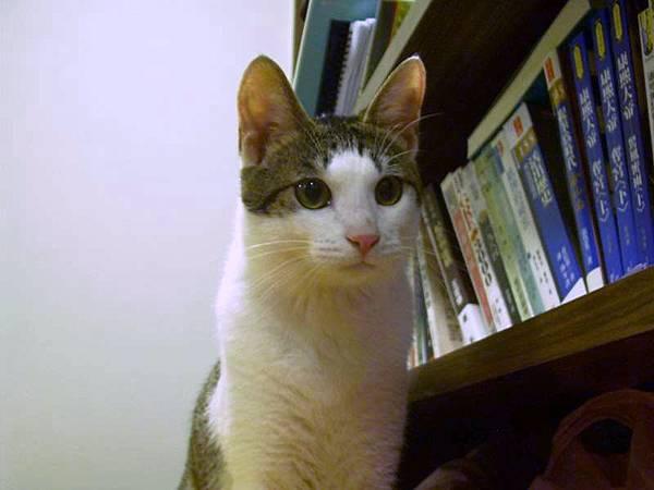貓也是要讀書的啊