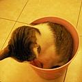 桶裝貓之二