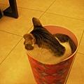 桶裝貓之三