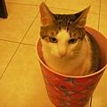 桶裝貓之四