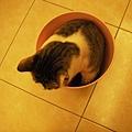 桶裝貓之五