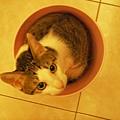 桶裝貓之六