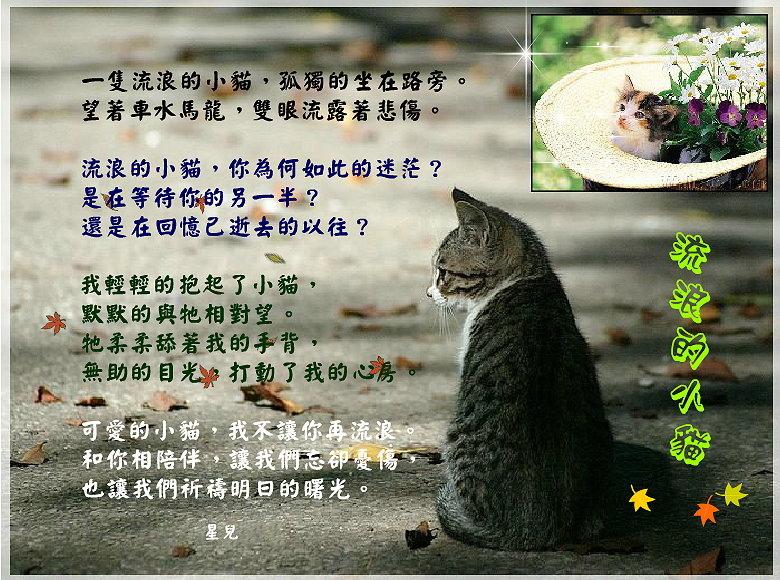 流浪的小貓
