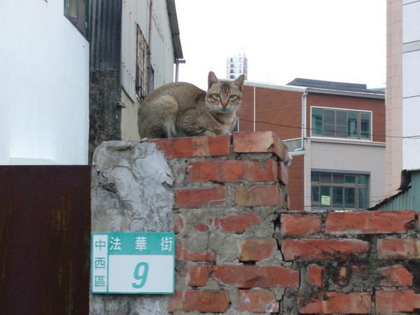 法華寺附近的貓