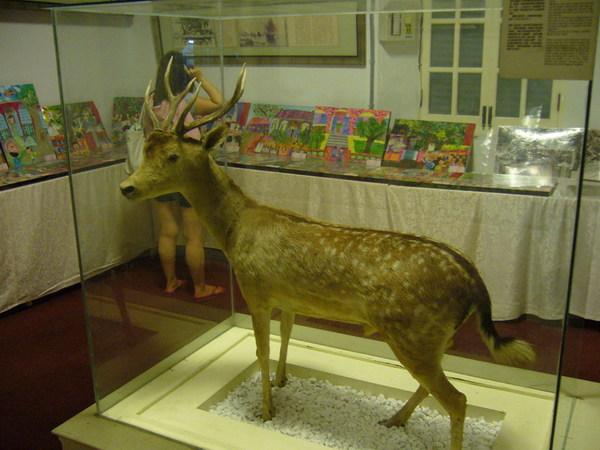 東興洋行的鹿