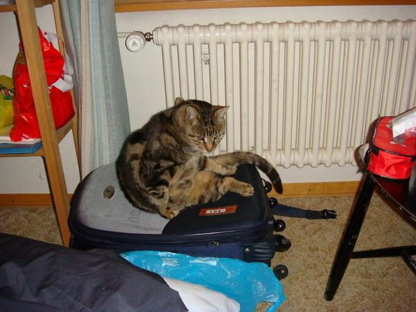 在瑞士兩個晚上,都跟Minou一起睡
