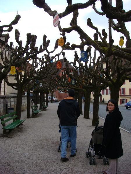 這是什麼樹呢,我也不瞭