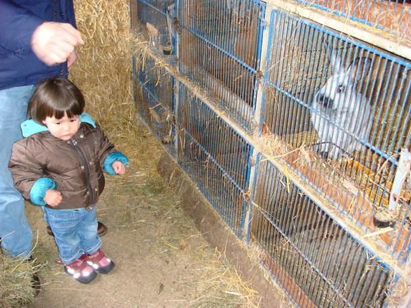 靄涵跟兔子