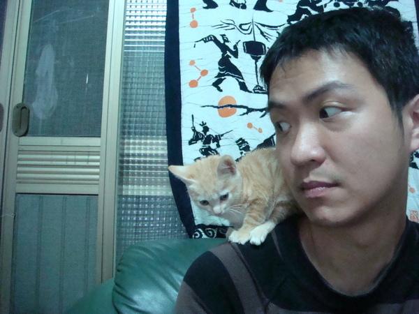 乘肩小母貓