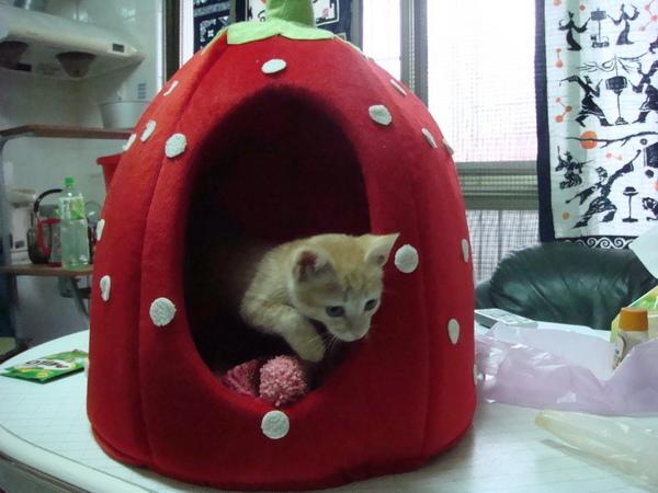 教主買的草莓屋