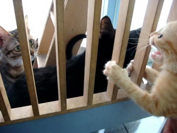 打開門我要進去
