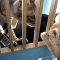 大貓也來探親