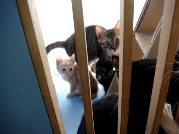 那兩隻小貓就是妙兒同胎的姊妹