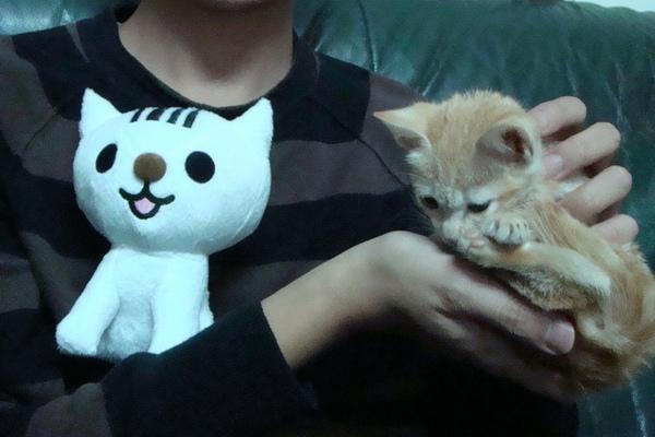 黃妙兒與條碼貓