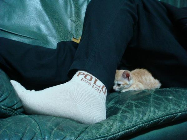 天冷了,躲在教主腳下取暖