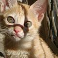 貓眼真清澈