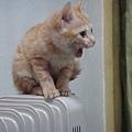 妙妙在新電暖氣上