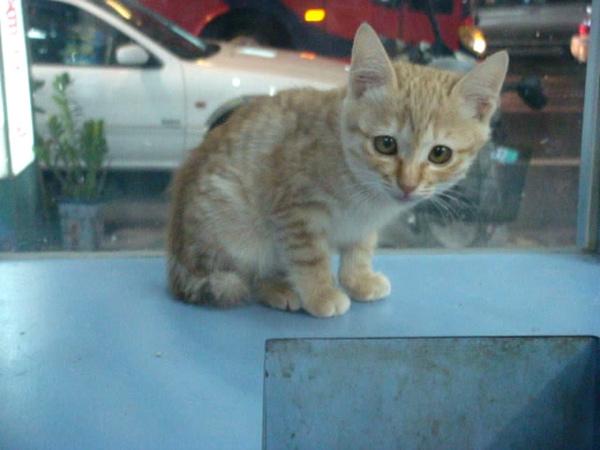 妙妙姐姐在貓籠