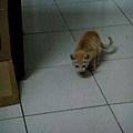 每天例行的躲貓貓遊戲