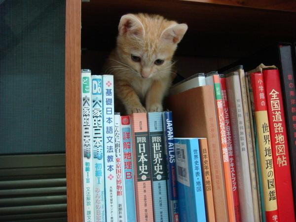 黃妙兒讀日文