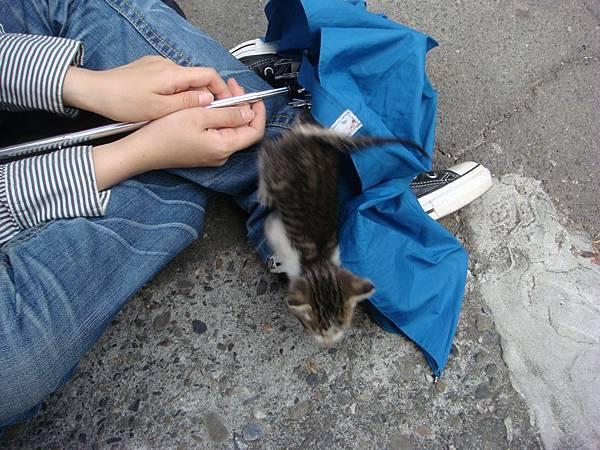 在鳳山城撿到的小貓